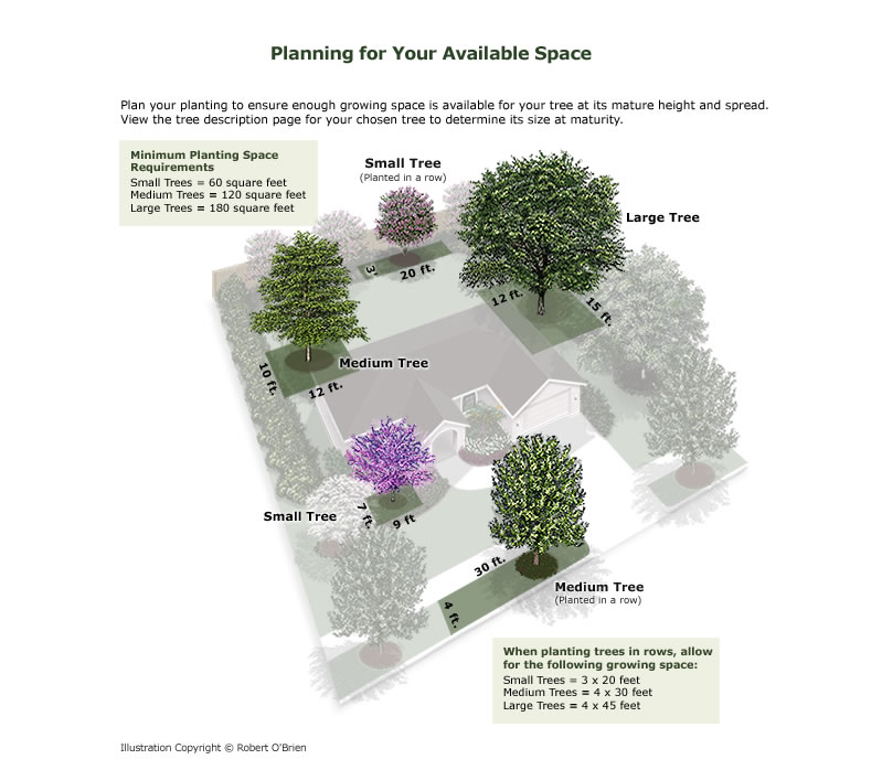 Available Space Graphic: Plan your planting to ensure enough growing space is available for your tree at its mature height and spread.