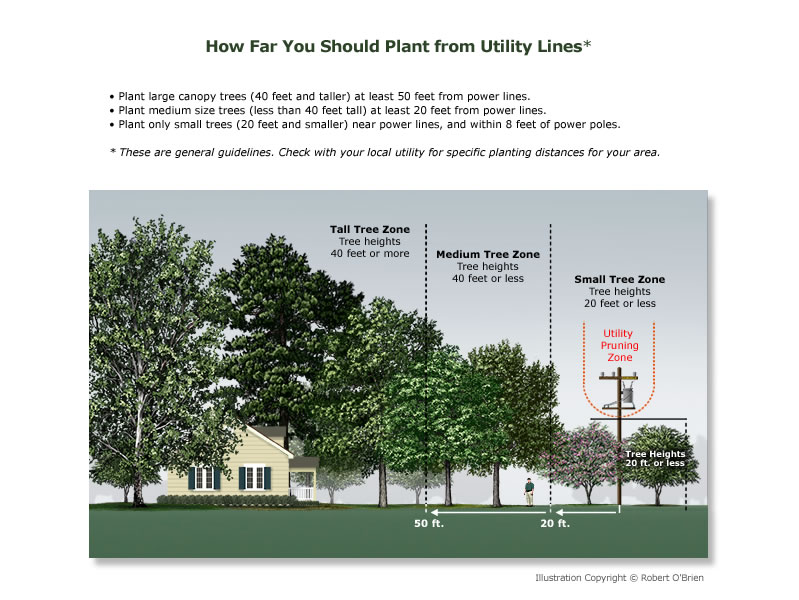 plant_near_utility_lines
