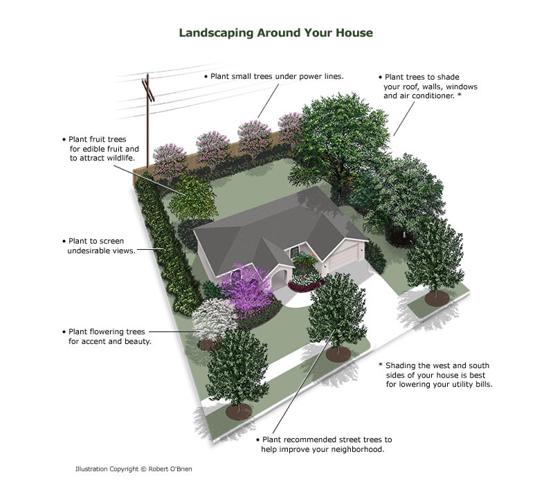 planting_around_house