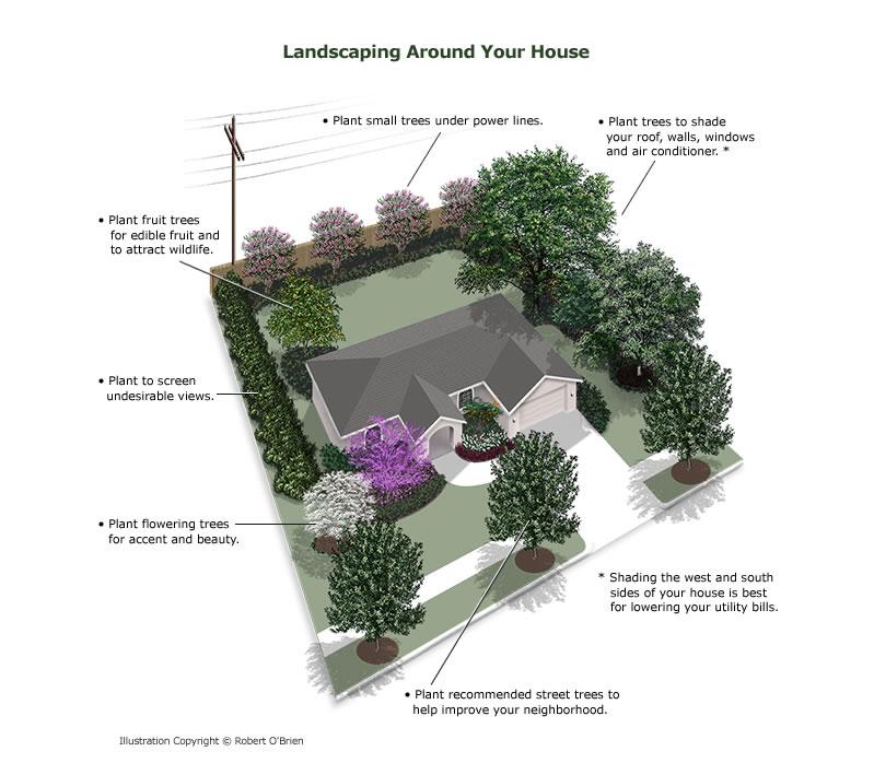 Tree Planting Header Around House