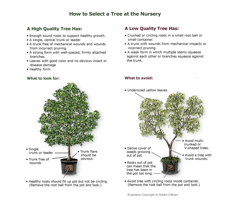 select_tree_nursery